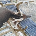 Alleged record deer hoax attempt leads to charges