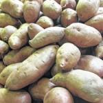 It's sweet potato time