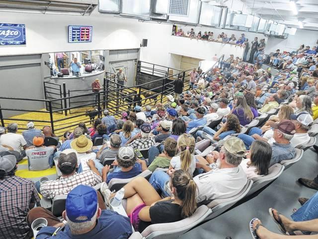 Folks stampede to livestock sale | Mt  Airy News